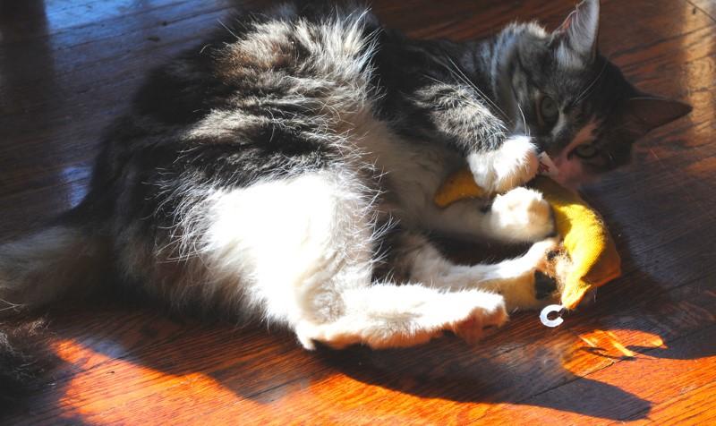 cat-and-banana