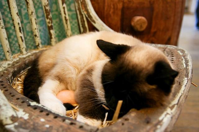 egg-for-cat